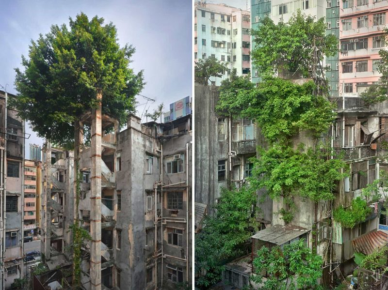 Schaue dir diese 20 verlassenen Orte an, die die Natur sich genommen hat