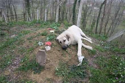 Als der Sohn das Grab des Vaters besuchen will, findet er den Hund so vor. Ein herzzereißender Anblick.