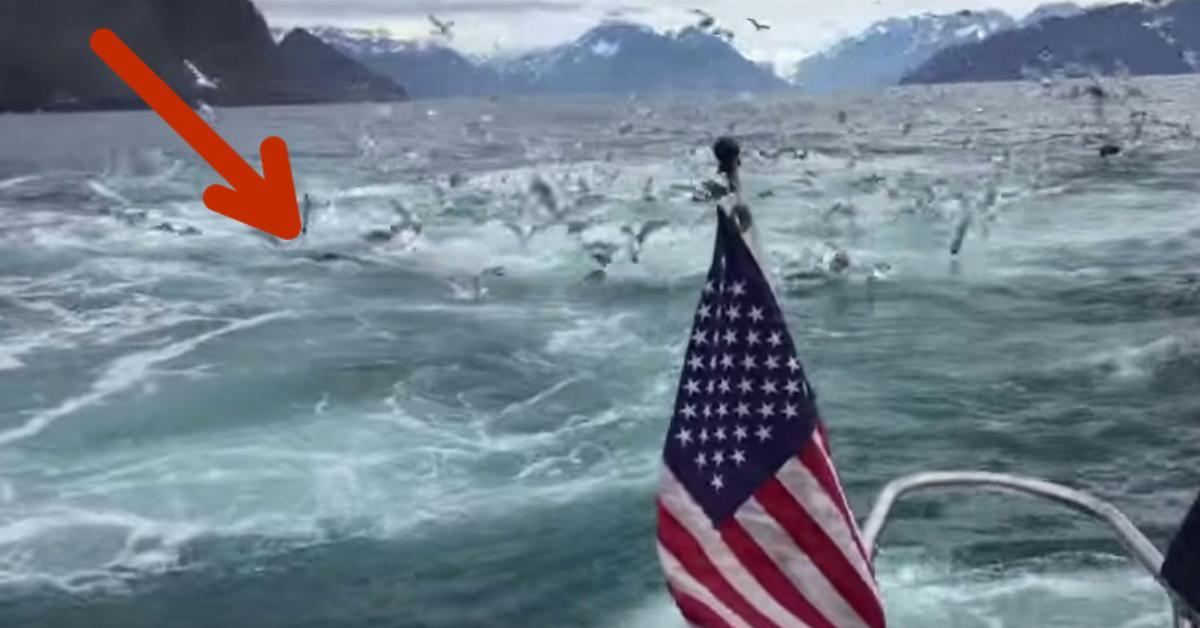 Die Männer auf dem Boot hören erst ein dumpfes Grollen. Doch was sich bei 0:57 aus dem Wasser erhebt. Da bleibt ihnen die Spucke weg.