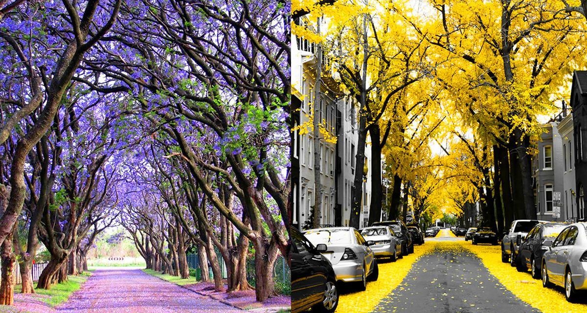 Dies sind die magischsten Straßen der Welt ... Fantastische Schönheit!