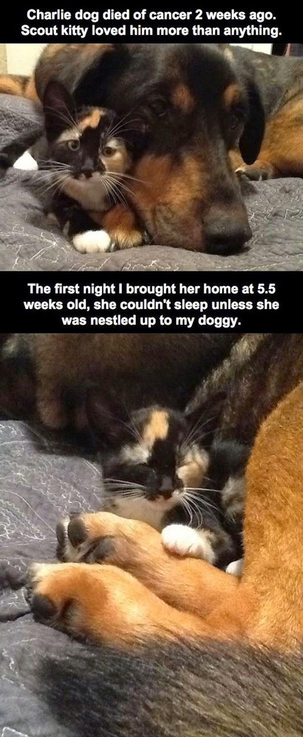 Der beste Freund der Katze verstarb – und nun schläft sie jede Nacht neben dem iPad