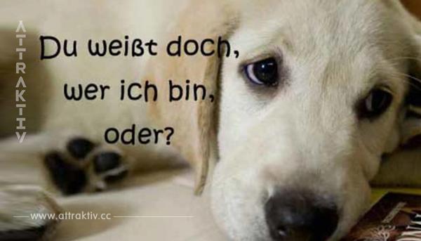 Nur, wenn du Hunde wirklich liebst, schaffst du diesen Test