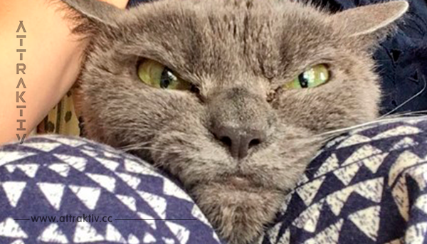 Wegen ihres erschreckenden Aussehens möchte niemand die Katze aus dem Tierheim mitnehmen.
