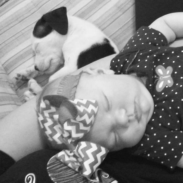 Hätten die Eltern ihr Neugeborenes nicht mit dem Pitbull alleine gelassen, wären diese Fotos nicht entstanden. Zum Dahinschmelzen!