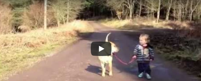 Der Junge lässt plötzlich den Hund los – etwas Anders hat seine Aufmerksamkeit auf sich gezogen