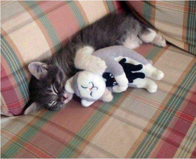 27 ungewöhnliche Katzen-Schnappschüsse.