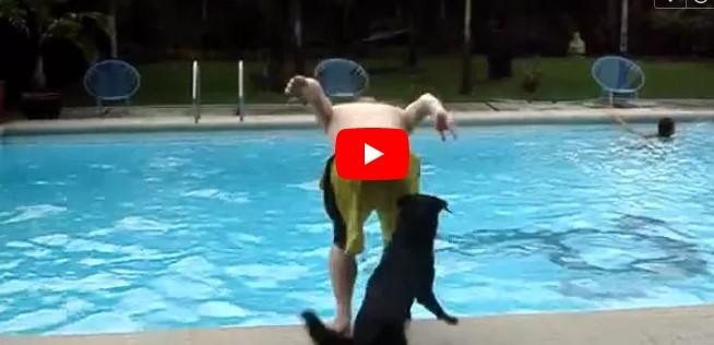 Der Mann steht am Rand des Pools – aber achtet auf den Hund, der sich heranschleicht!