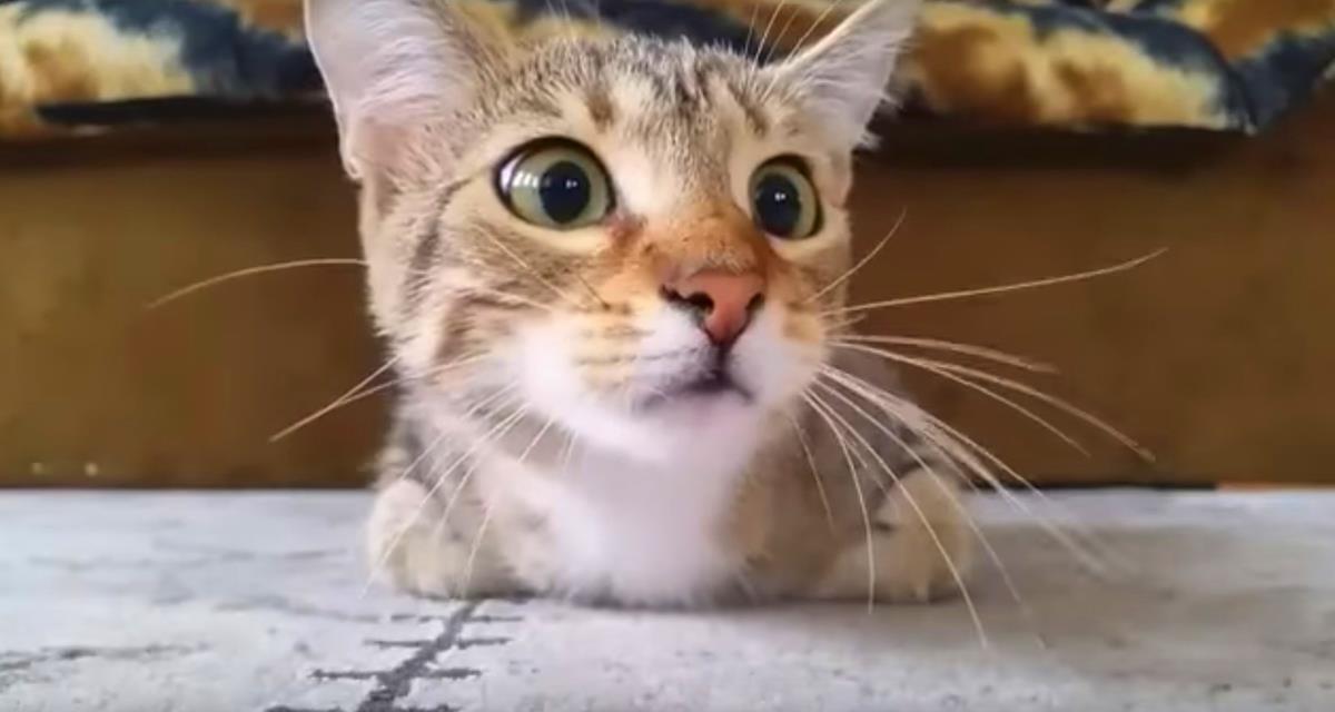 Die Katze, die sich einen Horrorfilm anschaut, wurde zum Star des Internets. Man braucht es zu sehen.