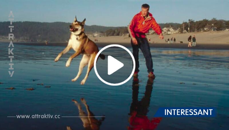 Dengali beweist, dass Hunde die loyalsten Freunde abgeben