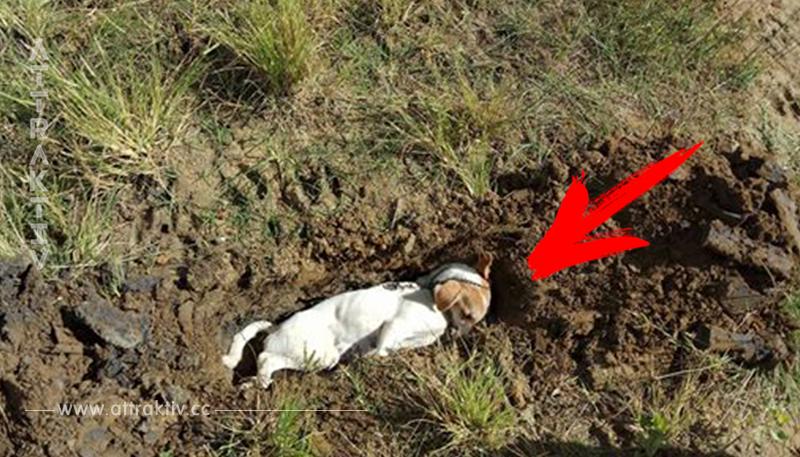 Tapferer Hund in Indonesien wehrt Einbrecher ab und wird deshalb vergiftet.