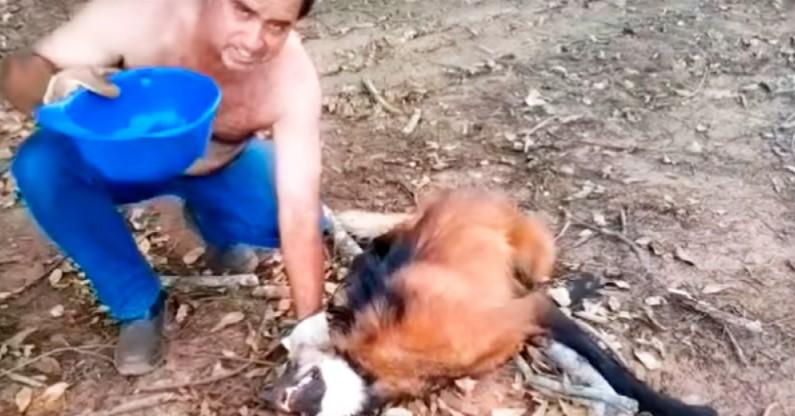 Der erschöpfte Wolf war eine Haaresbreite vom Tod entfernt. Was dieser Mann gemacht hat, ist unglaublich!
