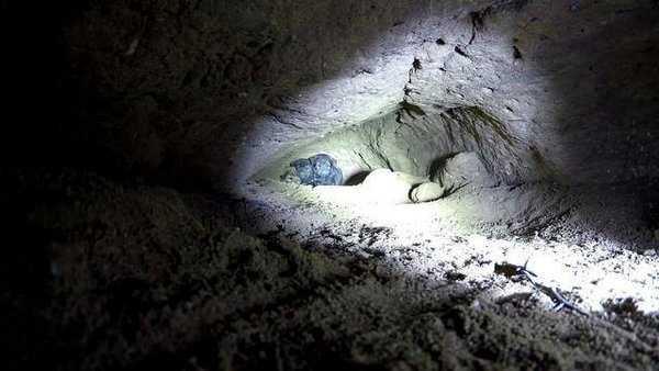 Der Mann findet 8 Welpen in einer Höhle – doch dann macht er eine überraschende Entdeckung