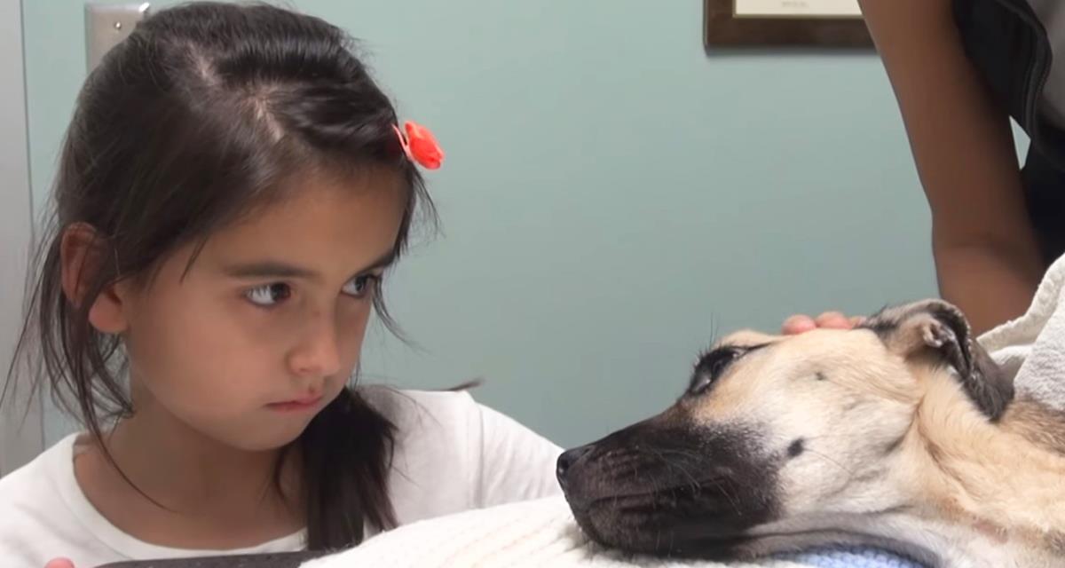 Das Mädchen sah in die Augen eines sterbenden Hundes ... Und plötzlich geschah etwas Erstaunliches!