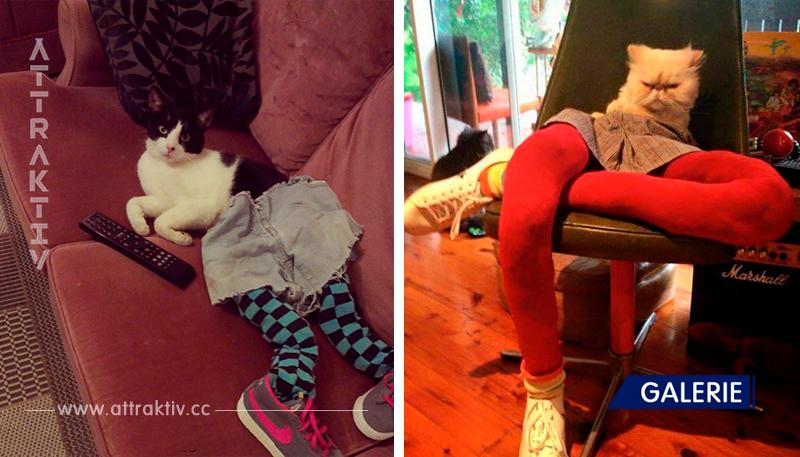 Neuer Fototrend: 20 Katzen mit Leggings und Schuhen.