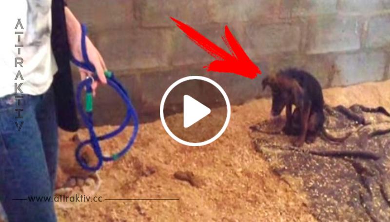 Besitzer wollten den Welpen töten, weil er nicht spielen wollte – dann entdeckt der Tierarzt die Wahrheit!