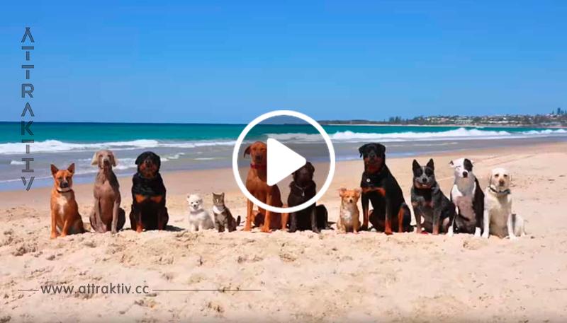 Der Mann fährt mit seinem Auto mitsamt all den Hunden zum Strand – sieh was passiert, als er sie freilässt!