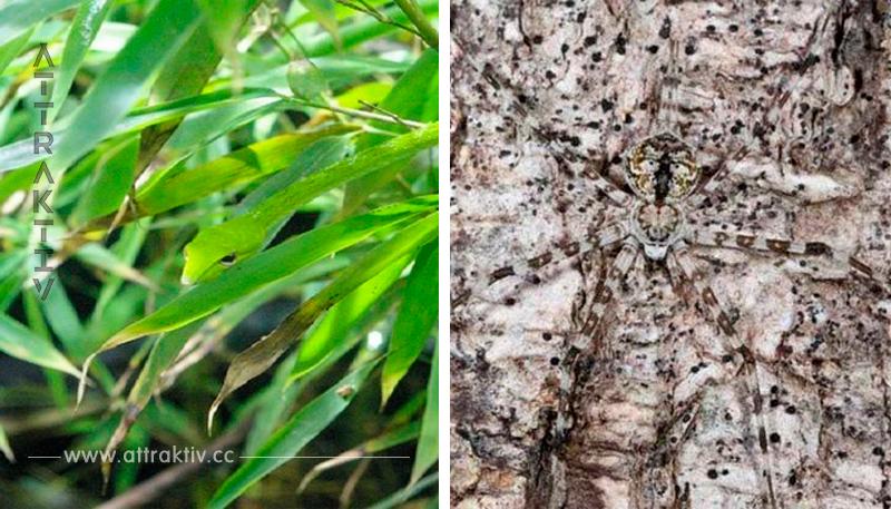Siehst du alle Tiere auf diesen Bildern?