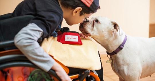 Kinderhospiz Tambach Dietharz trauert um Therapiehund Lisbeth