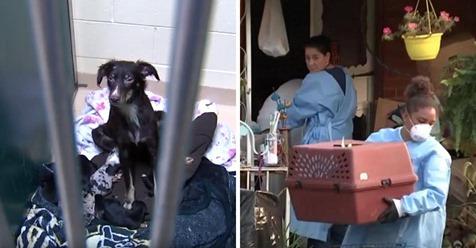 Hausbesitzer ruft die Polizei wegen dem Gestank bei den Nachbarn. Polizisten finden dort über 100 gefangene Hunde.