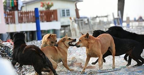 Straßenhunde beißen Neugeborenes in OP-Saal tot – Klinik bietet Eltern Schweigegeld an