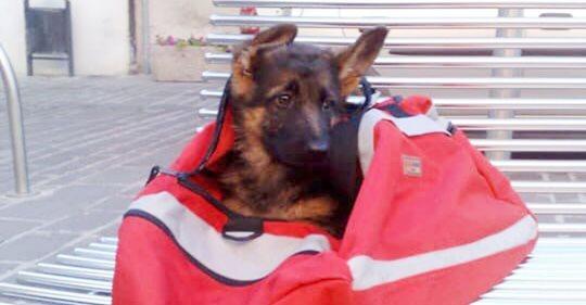 Schäferhund Laga: Deshalb weint ganz Italien um einen Nationalhelden