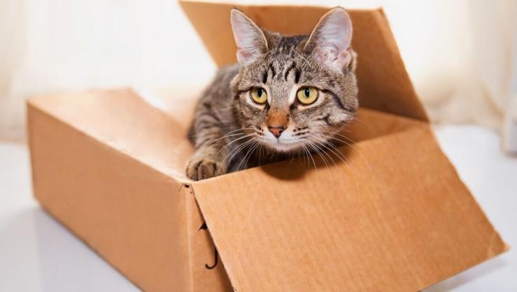 Kätzchen hilft beim Verpacken eines Pakets: Dem Empfänger bleibt das Herz stehen