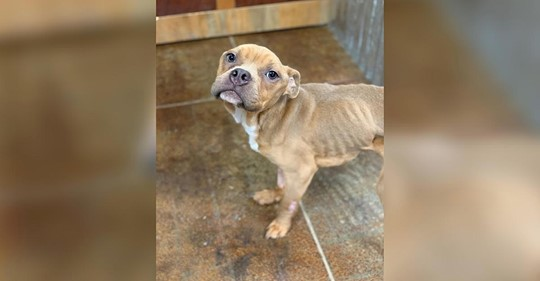 Unfassbar: Frau verhaftet, nachdem sie ihren Hund in einen Käfig steckte und in den Müll warf