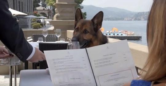 Schäferhund aus Deutschland kostet 400 Millionen Euro: Der Grund macht die Welt sprachlos!
