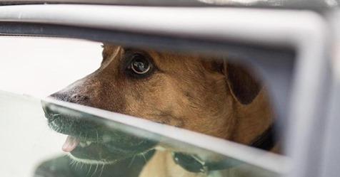 Schrecklicher Vorfall in Russland: Paar holt Welpen aus Tierheim – um ihn zu essen