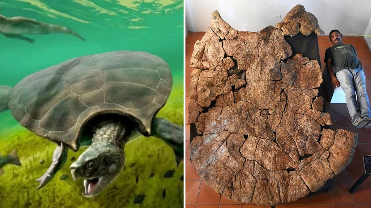 Vier Meter und 1,25 Tonnen: Forscher entdecken Überreste einer Riesenschildkröte