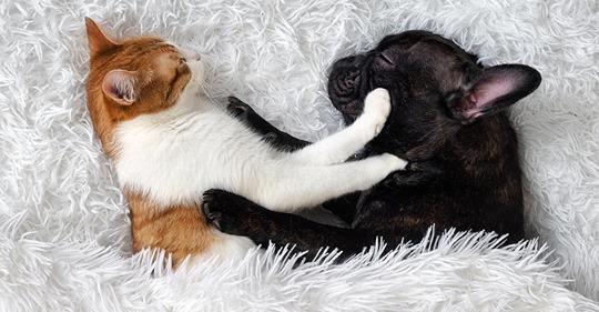 Studie: Das fühlt Ihre Katze wirklich, wenn Sie mit ihr spielen