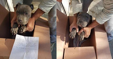 Junge (12) bringt Welpen ins Tierheim, weil sein Vater den Hund misshandelte
