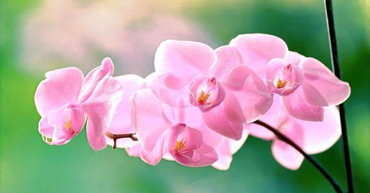 Orchideendünger: Mit diesen Tricks bleibt die Orchidee gesund