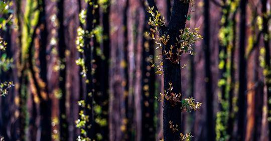 Australien nach den Bränden: Die Natur kehrt zurück