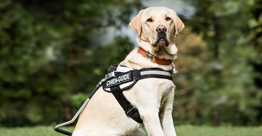 'Keine Tiere': Busfahrer will blinde Frau mit ihrem Blindenhund nicht mitnehmen