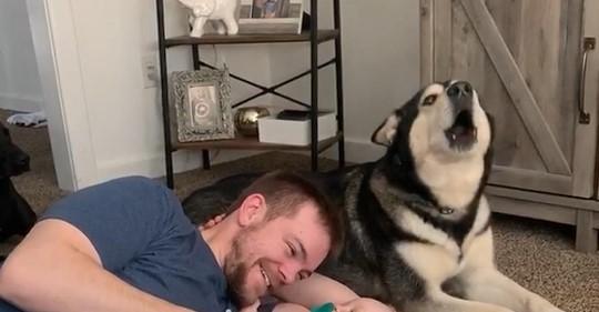Vater bringt Baby zum Lachen - eifersüchtiger Husky findet das gar nicht lustig
