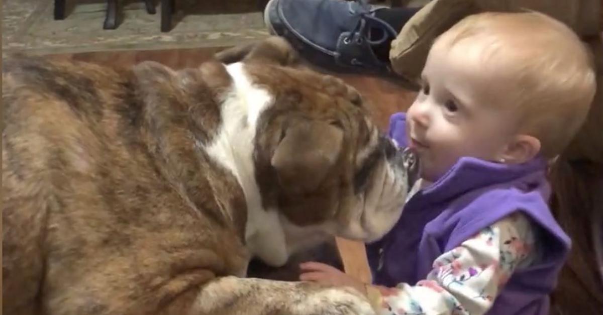 Tierisches Freundschaftsangebot:Bulldogge sieht erstes Mal ein Kleinkind