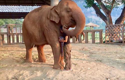 Engagierte Elefantenpflegerin singt junge Elefantin mit Gute-Nacht-Lied in den Schlaf