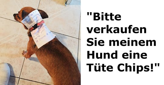 Gewitzte Chihuahua-Hündin versorgt ihren Menschen während Quarantäne