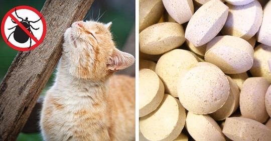 Zeckenmittel: Katzen mit natürlichen Mitteln vor den Parasiten schützen