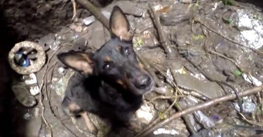 Der Hund jault, als er sieht, dass die Rettungshelfer kommen, um ihn zu retten