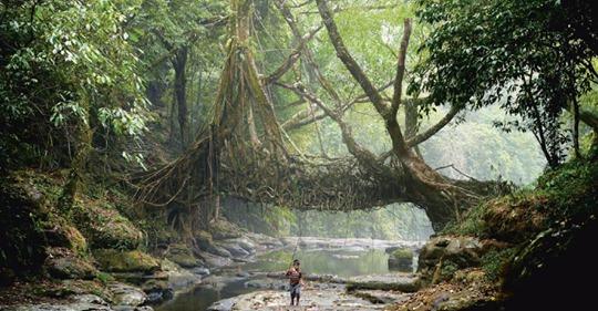 So bauen Menschen seit Jahrtausenden mit der Natur