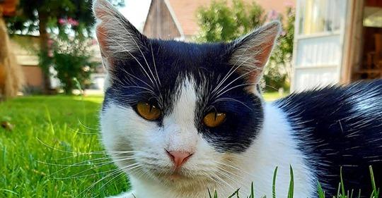 Brutale Tierquälerei: Katze Nora wird als Fußball benutzt - und stirbt