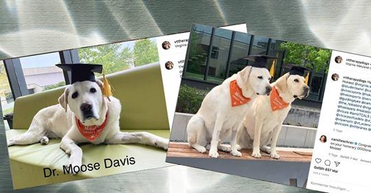 Für besondere Dienste an der Universität: Therapiehund erhält Ehrendoktor