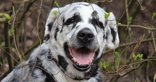 Süßer Labrador: Als sich sein Fell plötzlich verändert, kriegen sie es mit der Angst zu tun