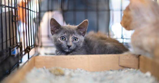 238 verwahrloste Katzen aus Haus gerettet   wenn Tierliebe zu weit geht