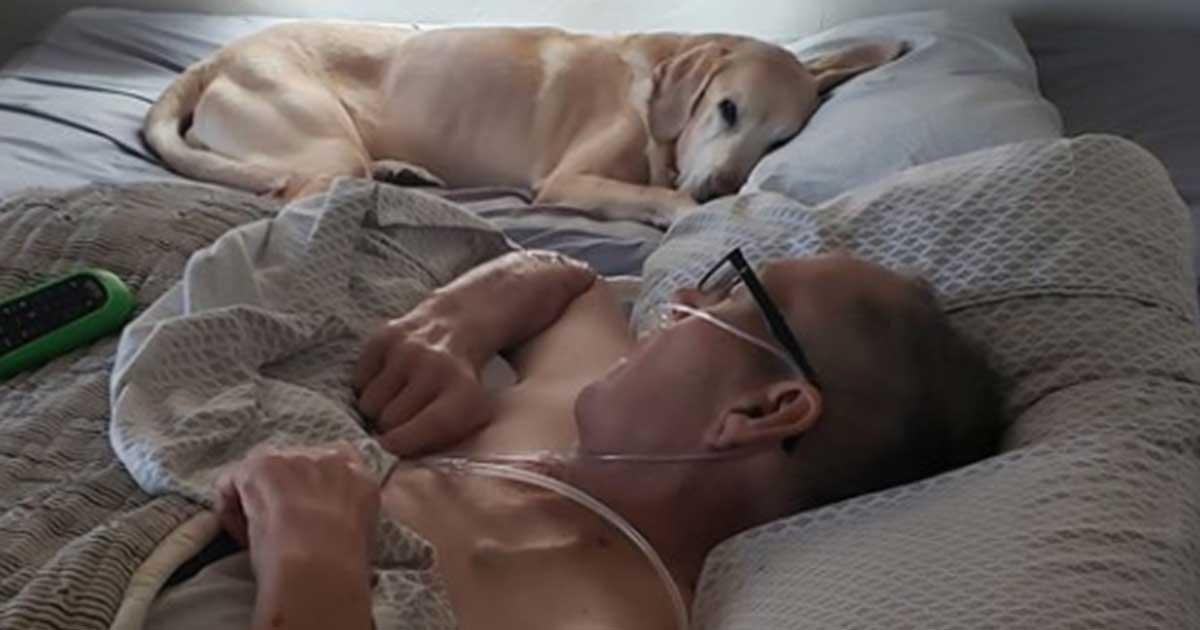 Hund schläft jeden Tag neben krebskranken Herrchen: Labrador stirbt eine Stunde vor ihm