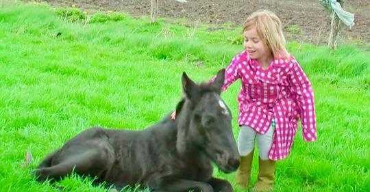 Pferd bringt ein ganz besonderes Zwillingspaar zur Welt