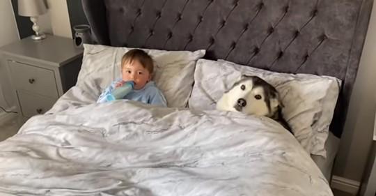 Husky wartet darauf, dass der Vater weggeht, damit er kuscheln kann