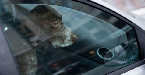 Besitzer lassen Hund bei 28 Grad im Auto